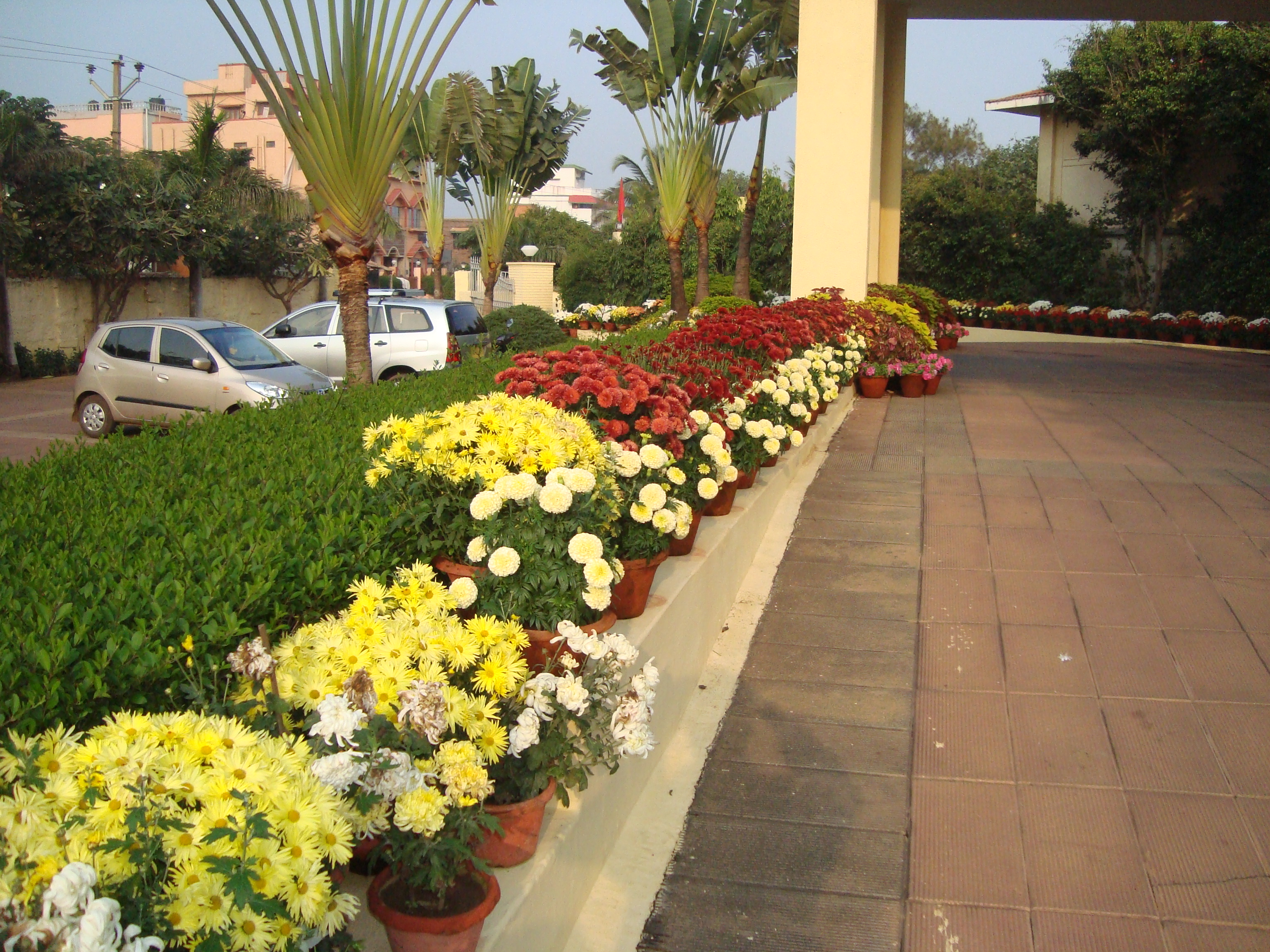Nursery Garden / Vertical Green Wall Design - My website